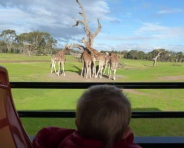 Werribee Zoo Review! Checking Out The Werribee Open Range Zoo