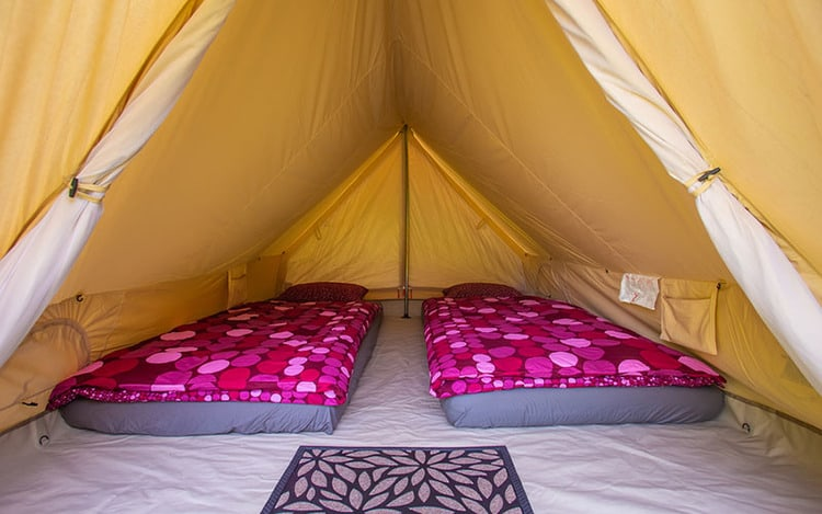 Tent interior with mattresses and purple duvet covers.
